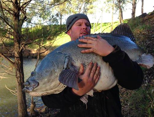 What a fish - caught at Gooloogong
