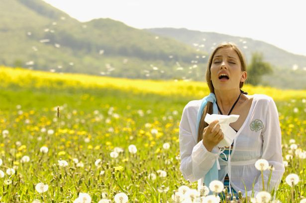 How-to-Prevent-Hay-Fever