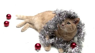 stock-footage-cat-wrapped-in-holiday-tinsel-isolated-on-white-v