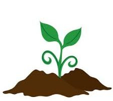 Improving The Health Of Your Soil