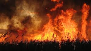 Preparing Your Home And Family For Bushfire Season