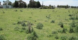 Poisonous Plant Problems During Drought